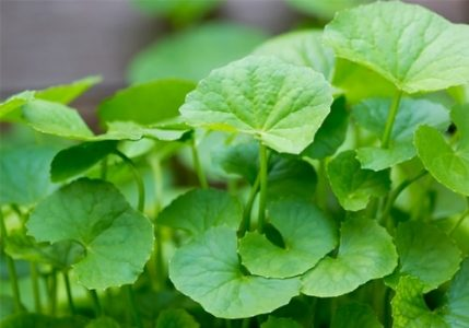 4 loại rau thơm giúp chống lão hóa da cho các chị em