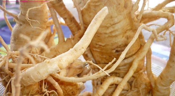 Những tác dụng của rễ đinh lăng
