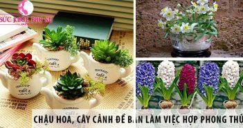 Chậu hoa, cây cảnh để bàn làm việc hợp phong thủy đón tài lộc