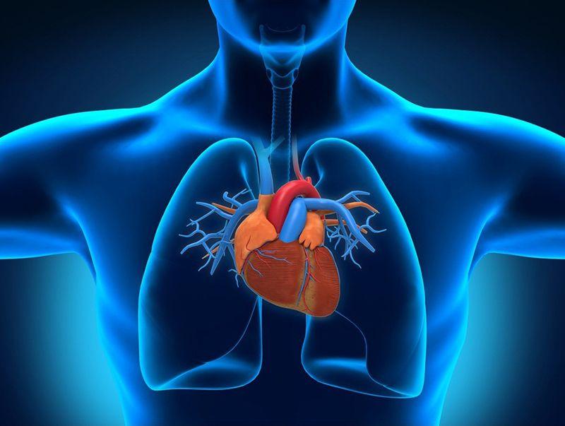 Tập Cardio giúp cải thiện hệ thống tim mạch