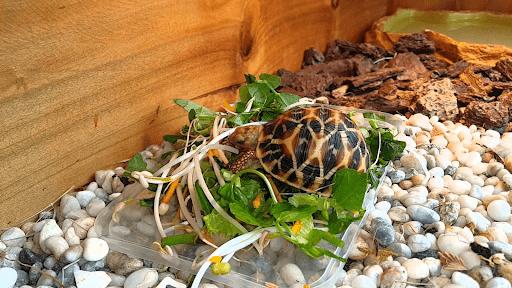 Thức ăn cho rùa