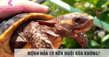 Mệnh Hỏa có nên nuôi rùa không?