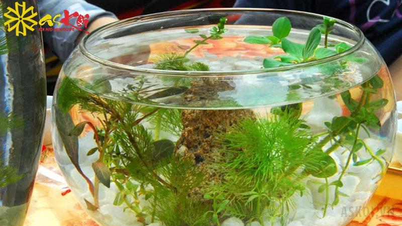 Bể cá hình tròn để bàn