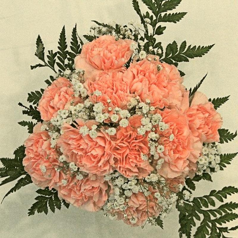 Ngày quốc Tế phụ nữ 8/3 nên tặng mẹ hoa cẩm chướng