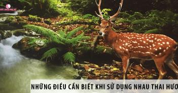 Những Thông Tin Cần Biết Trước Khi Sử Dụng Nhau Thai Hươu